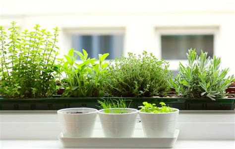 Window Herbs Kitchen Herb Garden Uses For Herbs In Cooking Cooking