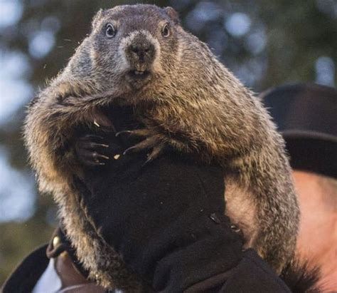 groundhog day time groundhog day 2018 punxsutawney phil sees shadow