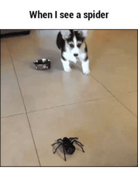 I Saw A Spider Meme - when i see a spider when i see a spider meme on sizzle