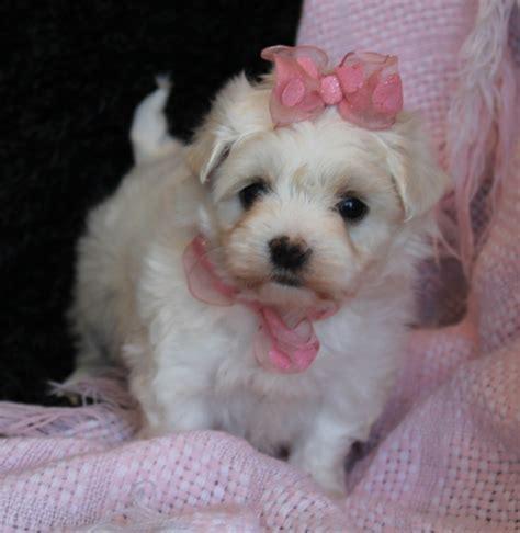show me puppies contessa will be joining trisha soon