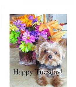 happy puppies net reaction morning cat breeds picture
