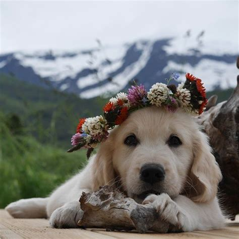 hippy puppy wuvely