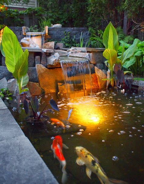 Bibit Ikan Koi Bali jual ikan hias koi di bali tips cara merawat kolam ikan koi