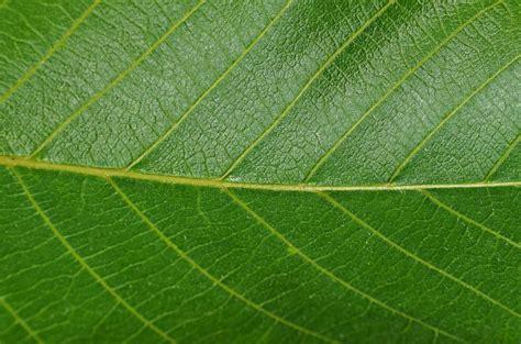 Daun Semi gambar pohon alam menanam tekstur daun bunga