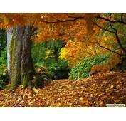 Beautiful Autumn Season Wallpapers HD  Nice