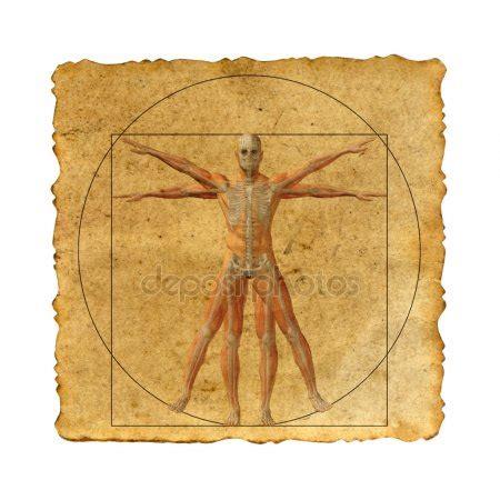 Leonardo Da Vinci 3488 by Davinci Stock Photos Royalty Free Davinci Images