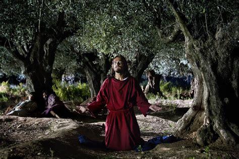 giardino dei getsemani di nazareth andreas pietschmann nell orto dei