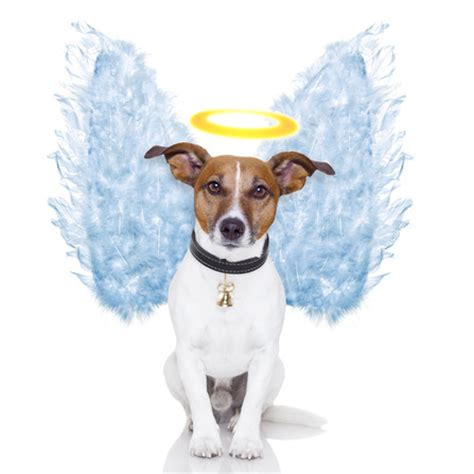 where do dogs go when they die do dogs go to heaven ask the pope napa s daily growl