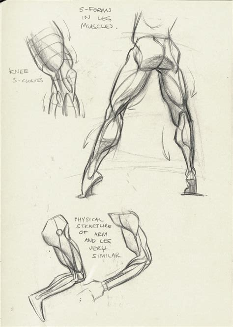 Drawing Anatomy by 1000 Images About Character Anatomy Human On