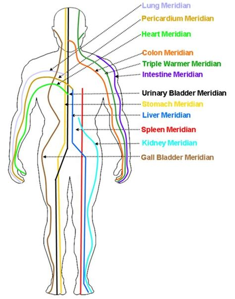 medicine meridians diagram what are the meridians alternative resources directory