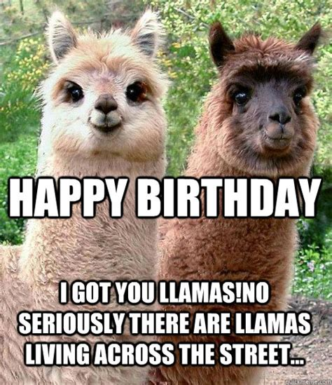 happy birthday llama memes quickmeme