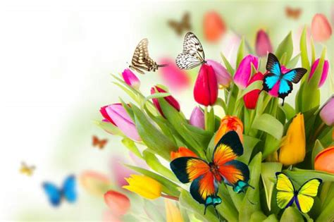 imagenes vacaciones de primavera flores bonitas ideas preciosas para tu fiesta en primavera