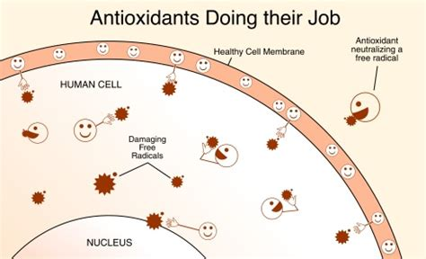 Do Antioxidants Help With The Prevention Against Aging by How Alkaline Ionized Water Benefits Your