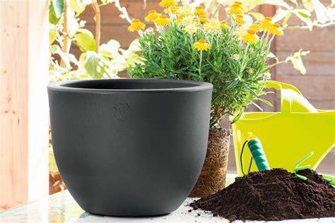 potatura fiori in preparazione della primavera pulire potare