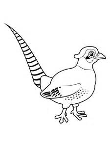 pheasant coloring pages download print pheasant coloring pages