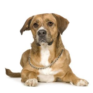 is it normal for puppies to diarrhea how to treat canine diarrhea health