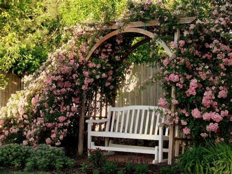 rose arbor and trellis my garden plans pinterest wow climbing pinkie roses one on each side rose