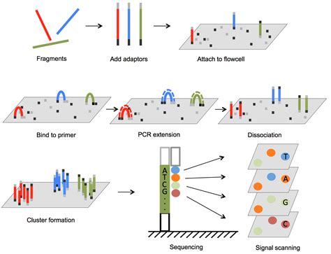 sequencing illumina next generation sequencing in aquatic models intechopen