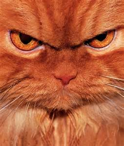 Independent Kitchen Designer grumpy ginger tom cat who does he remind you of
