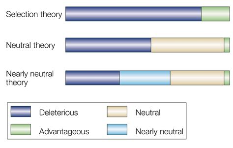 what are neutral mutations the state of modern evolutionary theory may not be what