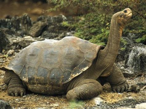 imagenes animales galapagos habitantes de las islas gal 225 pagos cubadebate