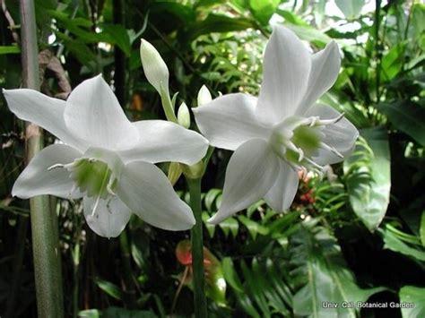 piante da vaso esterno piante da esterno in vaso piante da giardino piante da