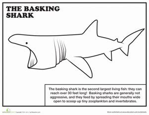 basking shark coloring page basking shark coloring page education com