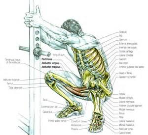 Male human body parts anatomy chart body