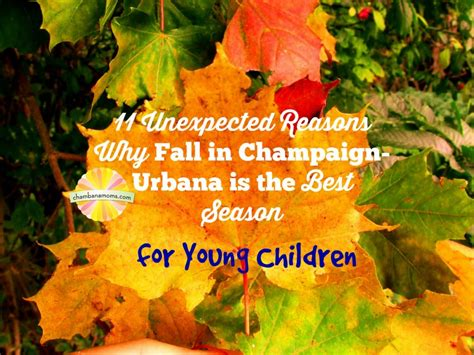 why fall is the best season 11 unexpected reasons why fall in chaign urbana is the