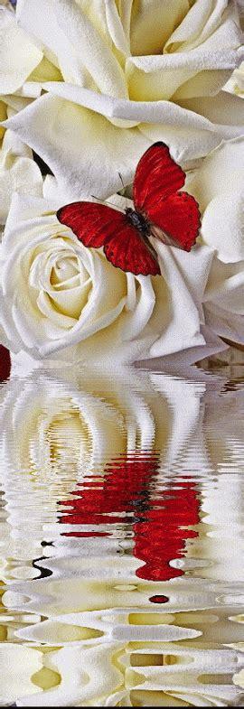 imagenes de rosas blancas para facebook imagenes con movimiento y brillo imgenes para facebook