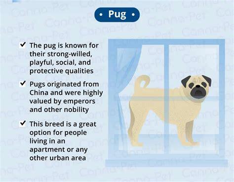 least aggressive breeds aggressive pug behavior 28 images k9 park launches behavior adjustment for