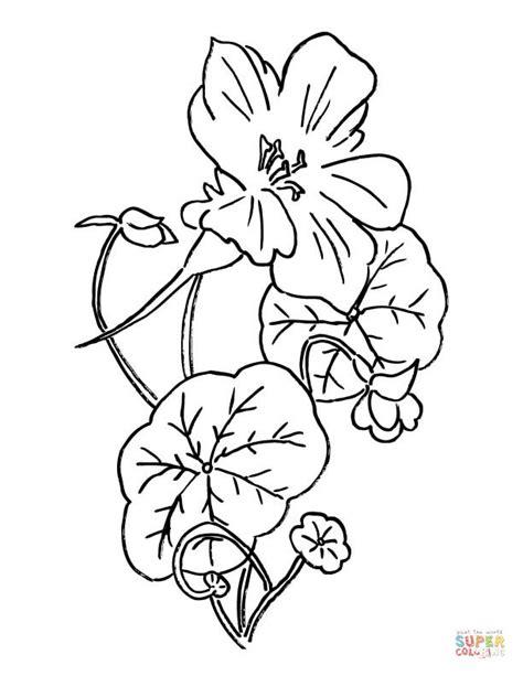 coloring page indian paintbrush nasturtium or indian cress coloring page free printable