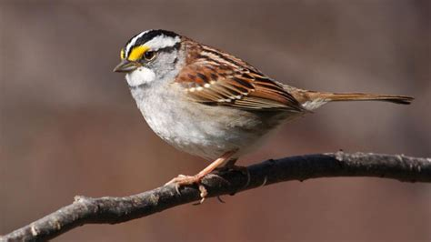 world sparrow day interesting facts on these chirpy birds