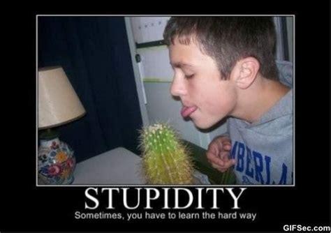 Stupid Funny Memes - stupid