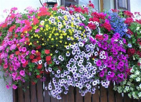 concorso balconi fioriti concorso quot balconi fioriti quot giornale cilento