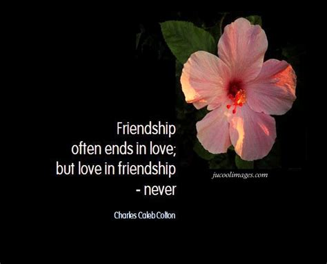 new friendship quotes friendship quotes witty quotes
