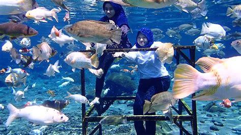masuk akuarium raksasa umbul ponggok youtube