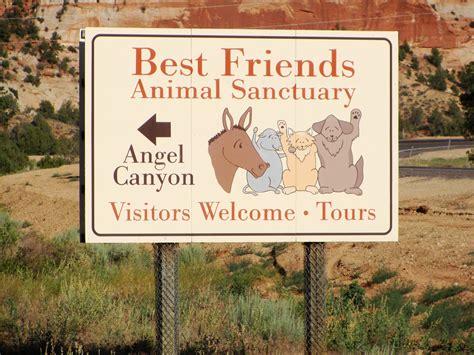 best friends animal sanctuary best friends animal sanctuary part 1 call it kismet