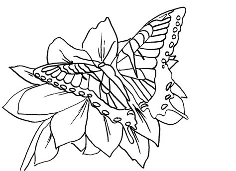 coloring page butterfly net free butterfly coloring pages tiger swallowtail