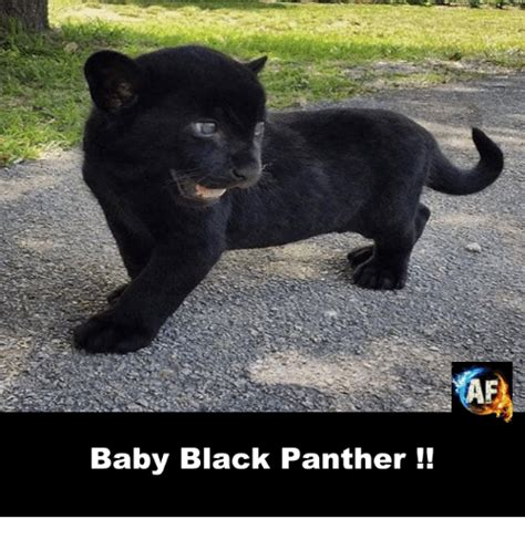 panthers memes 25 best memes about black panthers black panthers memes