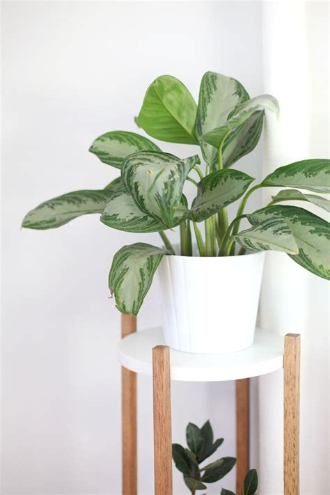 modern houseplants modern indoor house plants modern house
