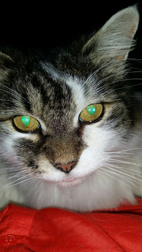 Cat 1 Named by Pet Re Homing And Cat Adoptions Pet Taxi