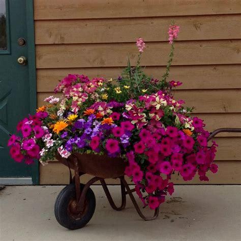 Wheelbarrow Planter Ideas by 25 Best Ideas About Wheelbarrow Planter On Wheelbarrow Garden Wheelbarrow Decor