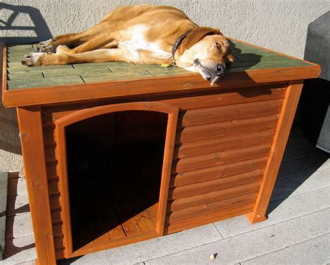 eco friendly dog house 26 brilliant dog houses that will change your pup s life