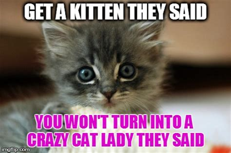 Cute Kitten Meme - kitten memes image memes at relatably com