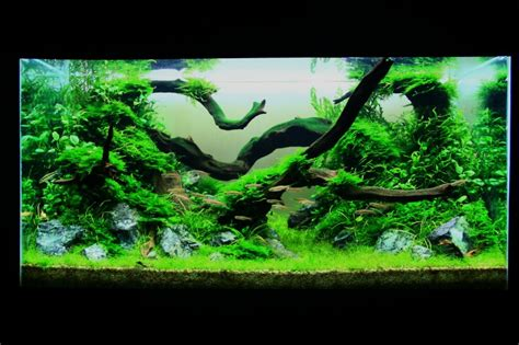 Aquascape Wood by Aquascaping World Competition Gallery The Green Wood
