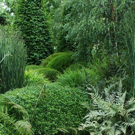 Plante D Interieur Ombre