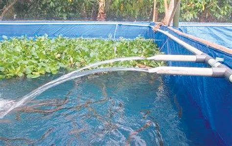 Harga Kolam Terpal Ikan Nila berita budidaya sidat di kolam terpal harian analisa