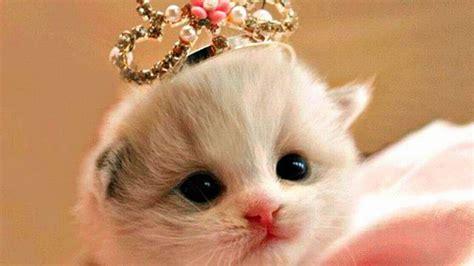Boneka Kucing Imut Lucu Terbaru foto animasi lucu dan imut terbaru distro dp bbm