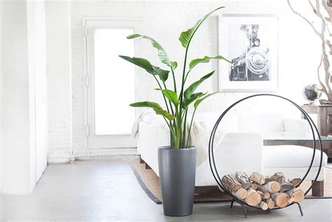 best inside plants 10 best indoor plants for men gear patrol
